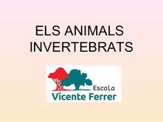 ELS ANIMALS INVERTEBRATS