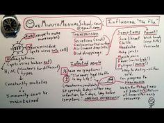 Influenza: the Flu Virus - One Minute Medical School