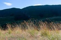 Diheteropogon filifolius - Google Search Grass Type, Grasses, Google Search, Nature, Plants, Travel, Lawn, Naturaleza, Viajes