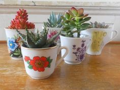 Succulents in vintage cups