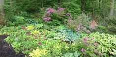 Excellent combination of colors, heights and textures in this landscaped garden