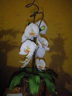 orquídea em eva