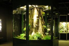 ... beyond our humble reach, the tree frog exhibit at the American Museum of Natural History is the ultimate vivarium!