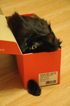 Black cat in the box. My kitty use to do this all the time too. Funny Cute Cats, Funny Animals, Cute Animals, Wild Animals, I Love Cats, Crazy Cats, Hate Cats, Photo Chat, Tier Fotos