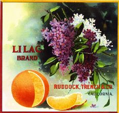 Los Angeles Lilac Flowers Orange Citrus Fruit Crate Label