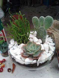 Aromas, Cores e Plantas: Arranjos com cactos e suculentas - Yesim Ete - Succulents In Glass, Succulent Bowls, Succulent Gardening, Garden Terrarium, Succulent Arrangements, Succulent Terrarium, Planting Succulents, Mini Cactus Garden, Cactus House Plants