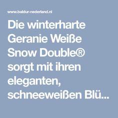 Die winterharte Geranie Weiße Snow Double® sorgt mit ihren eleganten, schneeweißen Blüten für ein märchenhaftes Flair in Ihrem Garten.