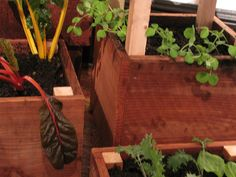 Edible Garden Boxes
