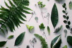Resultado de imagen de plants tumblr