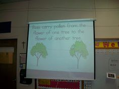 Powerpoint to show kids what an apple tree needs to grow