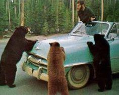 Road-Side Assistance Bears
