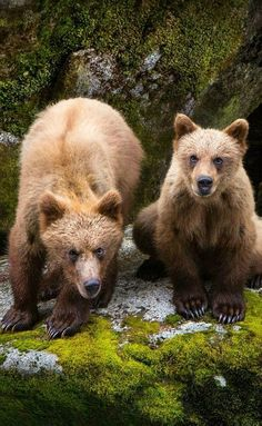 Waiting On Lunch | Grizzly Bears Photograph by Bryan Stockton