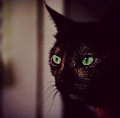 #cats #cateyes #petphoto #animalphotography #feline #dark #contrast #green #kitty #kitten #ilovecats #instacat #instacats #catofinstagram #catinstagram #ready #fridaystyle #friday #garfield #catoftheday #catstagram #pet #pets #petoftheday #mondays #mondaymotivation #ihatemondays