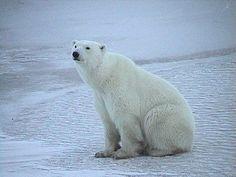 bear sitting images - Google 検索