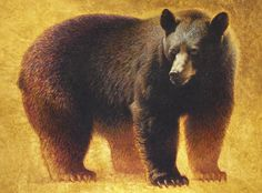 Ezra Tucker  ACRYLIC Bear Art, International Artist, Black Bear, Wildlife, Fantasy, Big Game, Illustration, Artwork, Card Ideas