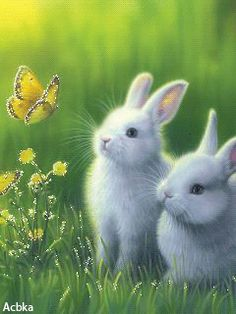 Bunnies and butterfly
