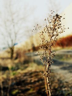 / looking for inspiration // nature beauty Photo And Video, Drawings, Artist, Nature, Plants, Photography, Painting, Inspiration, Beauty