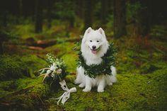 puppy with garland