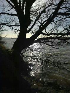 Tree's feet in water. Colchester Essex, Bliss, Landscape, Water, Plants, Gripe Water, Scenery, Plant, Corner Landscaping
