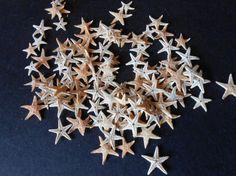 100 Real mini sea starfish 100 pieces of mini starfish