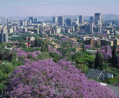 Pretoria, South Africa.. one of my favorite places!! Love the  purple Jacaranda trees there!!