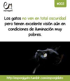 Esponjidato: Los gatos no ven en total oscuridad pero tienen excelente visión aún con condiciones de iluminación muy pobres.