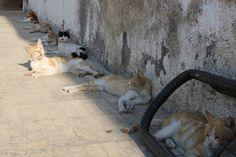 كتير شوب والشمس قوية #حلب #سوريا #قطط #Cats It's really hot and sunny #Aleppo #Syria