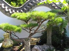 Marvelous This Chinese garden is not only visually pleasant it is also very relaxing
