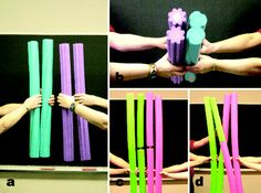 meiosis with pool noodles
