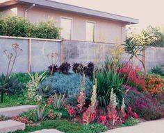 modern garden landscaping plants landscape