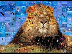 When you need to decorate your house or company with photomontage collage. Learn the best ways for creating photomontage collage here. Collage Foto, Photo Collage Maker, Photo Collages, What Is A Collage, Life Of Jesus Christ, Lion, Felt Pictures, Neil Diamond, Torn Paper