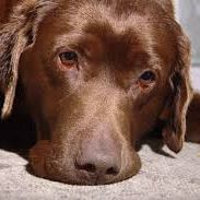 It is important to know some of the general symptoms of common heart disease, since early detection can help save your pet…