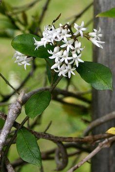 Wonderful Flowers, Beautiful Roses, White Gardens, Small Gardens, Landscaping Ideas, Garden Landscaping, Tree Borders, Serenity Garden, Perennial Gardens