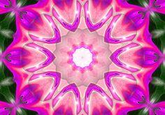 Heart of Hibiscus: Digital Art by Mo Davies