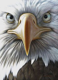 Bald Eagle - Painting Art by Edward Spera - Nature Art & Wildlife Art - Realistic paintings of subjects inspired from the wild - Spera Art Eagle Images, Eagle Pictures, Photo D Aigle, Eagle Painting, Painting Art, Eagle Drawing, Eagle Wallpaper, Eagle Art, Tier Fotos