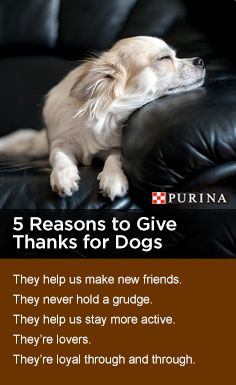 Tell us why you're thankful for your dog-then head to the Dollar General Pet Center brought to you by Purina® to find ways to return the love.