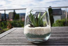 DIY: HVORDAN LAGE PLANT TERRARIUM