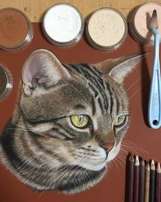 Danwon The Cat. Animals Translated to Realistic Drawings. By Ivan Hoo.