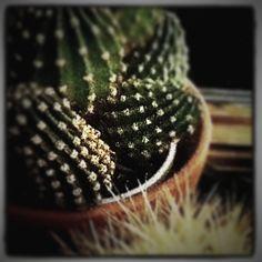 I do like a good old cactus. Prickly Cactus, Cactus Cactus, Desert Gardening, Desert Plants, My Flower, Flower Power, Desert Life, Principles Of Art, Epic Art