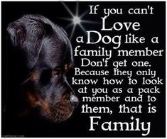 Because of my baby brother we are getting rid of our Doberman Pincher. To those who've never had to get rid of a pet, you don't know how painful it is. I just want to run away with that dog, that's all I want to do now. 7/19/13