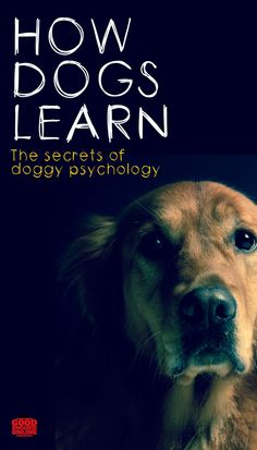 How dogs learn. Dog training can go a lot smoother if you understand a little dog psychology. Check out these tips. How dogs learn. Dog training can go a lot smoother if you understand a little dog psychology. Check out these tips. Dog Training Techniques, Dog Training Videos, Best Dog Training, Potty Training, Training Pads, Training Classes, Training Equipment, Crate Training, Leash Training