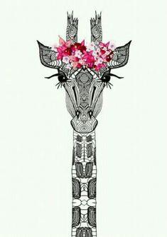 Girafa timblad
