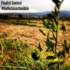 Contest #BellezzaSostenibile 2014!  9° finalist! The author is Casimiro Nigro!