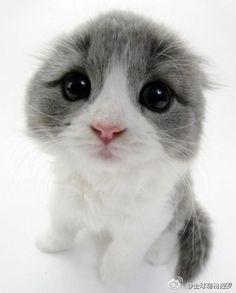 all star pics: Look at those eyes!