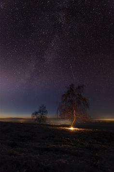 pada malam hari ini bintang menyinari pohon yang indah.