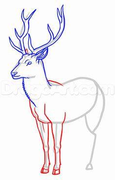 how to draw deer step 18