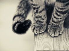 paws and a tail ^..^