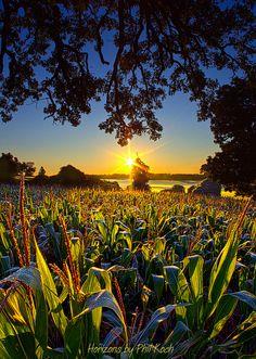 Sunrise in Wisconsin (by Phil Koch)