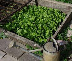 Growing a Home Vegetable Garden: A Comprehensive Guide  - https://www.facebook.com/gardeningchannel/posts/10153137293846852