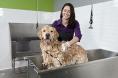 Heres some advice on how to start a self serve dog washing business heres some advice on how to start a self serve dog washing business solutioingenieria Images